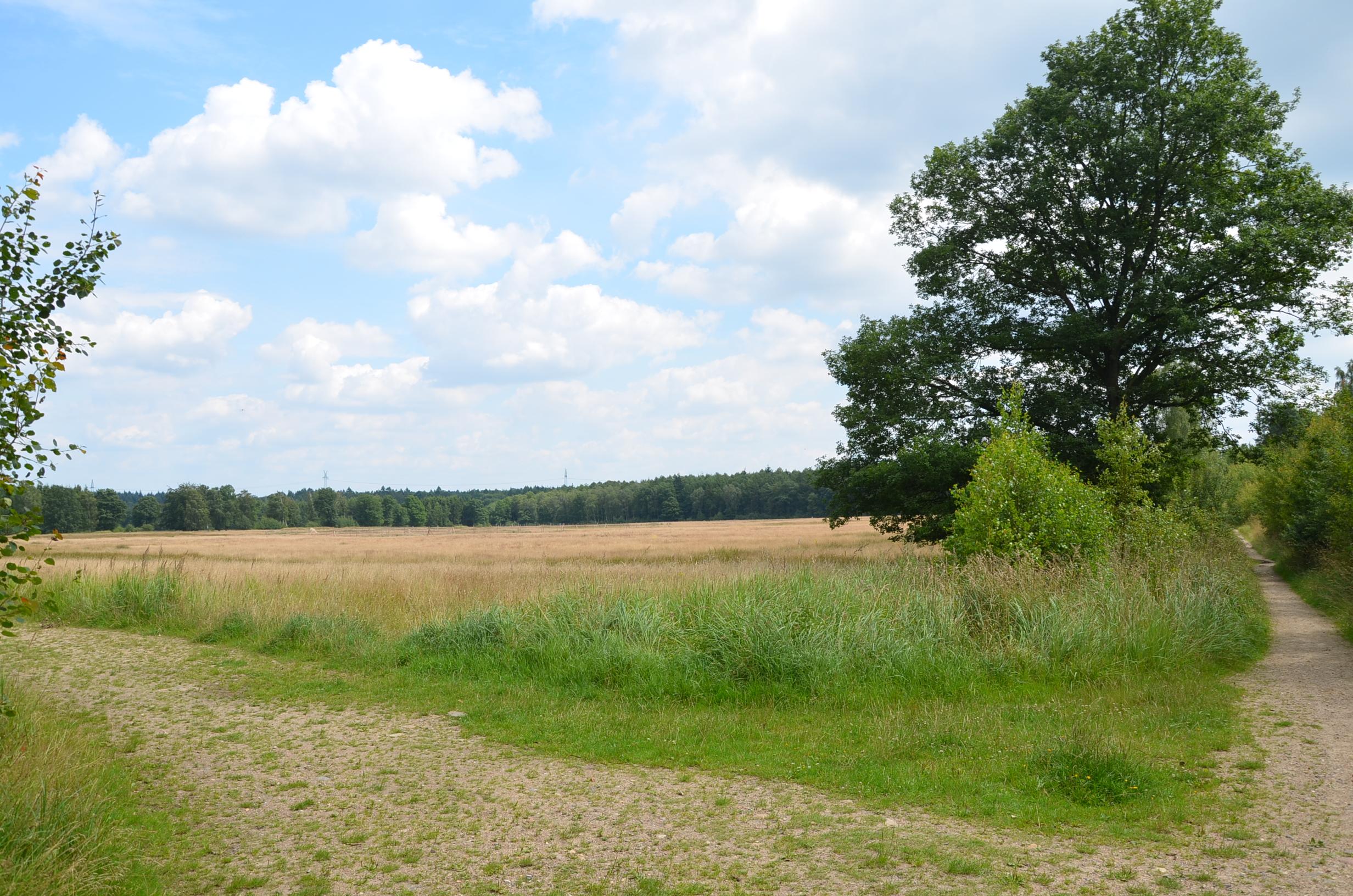 Die Wentorfer Lohe ist ein Naherholungsgebiet in Hamburgs Osten zwischen Wentorf, Wohltorf und Börnsen.  Auf dem rund 237 Hektar großen  Gebiet treffen sich Spaziergänger, Hundebesitzer, Freizeitsportler und Naturliebhaber.