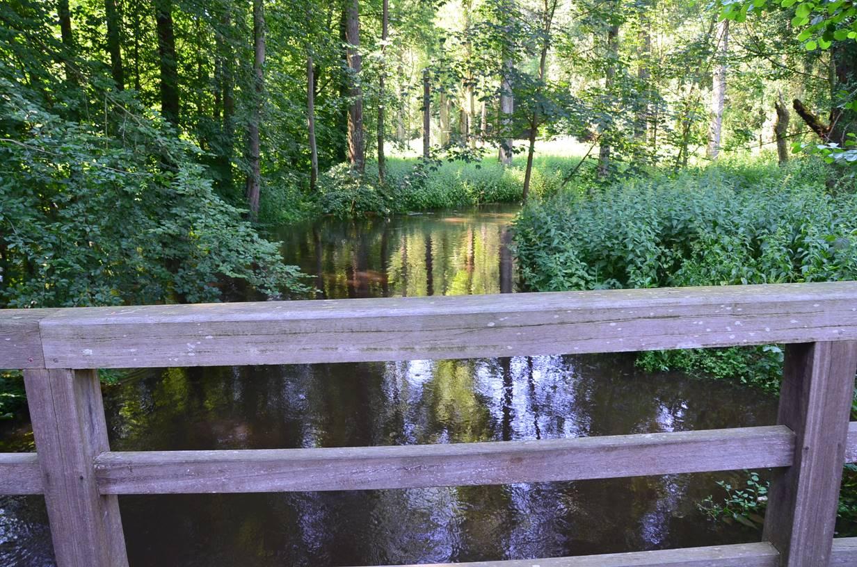 Die Bille ist ein Nebenfluss der Elbe und hat eine Länge von 65 Kilometer. In ihrem Oberlauf nimmt die Bille viele Bäche und Kleingewässer auf. In Reinbek ist die Bille zum Mühlenteich angestaut, an dessen Ufer das Reinbeker Schloss liegt.