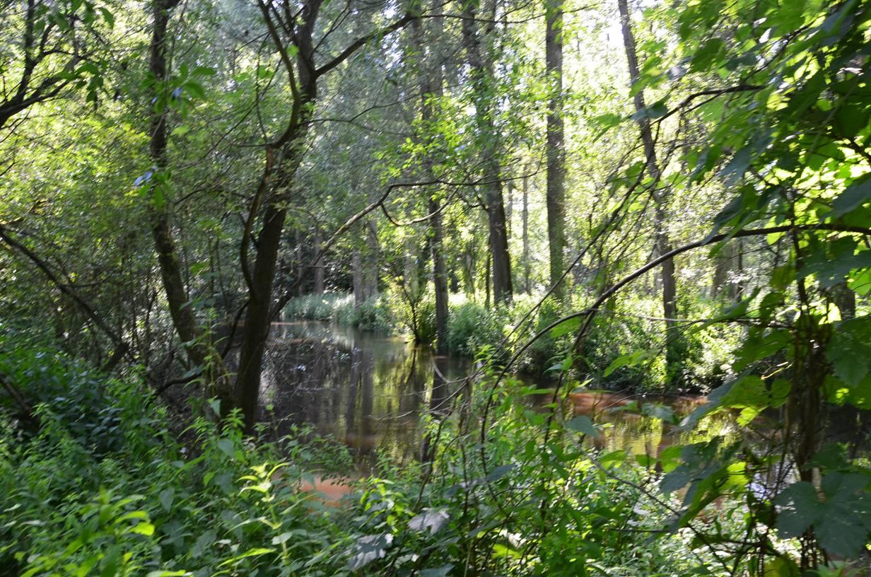 Das Billetal ist ein Naturschutzgebiet. Geschützt ist der Teil des Flusses Bille, der zwischen der Grander Mühle und der Einmündung in den Reinbeker Mühlenteich liegt. Er hat naturnahe, fließgewässertypische Strukturen mit einer entsprechenden Tier- und Pflanzenwelt.